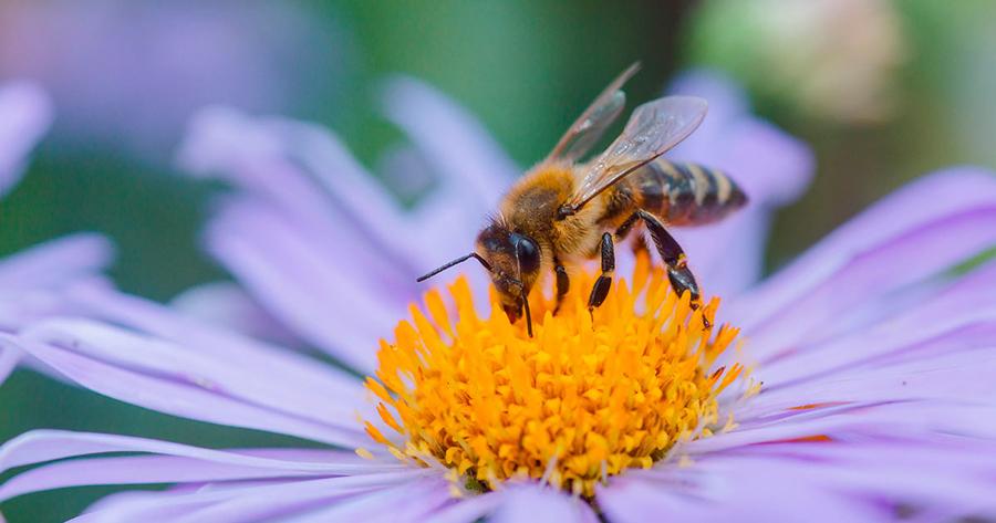 Moria delle api: scompaiono 3 colture su 4