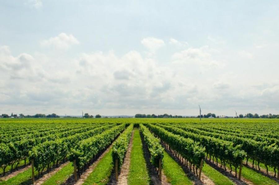 Agricoltura e UE: reddito in crescita e più sostenibilità