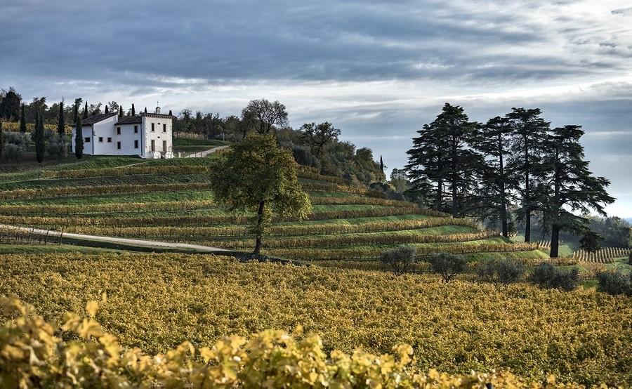 Bertani ha riaperto le porte delle sue tenute e presentato i nuovi vini