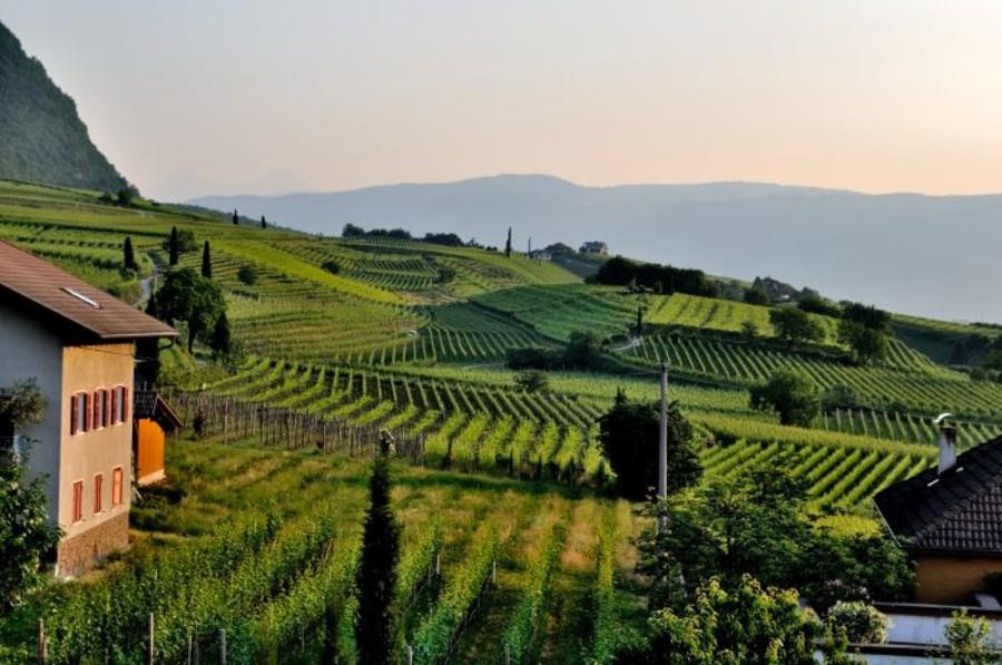 """Ferragosto """"green"""" per otto milioni di italiani: gli agriturismi la meta prediletta"""