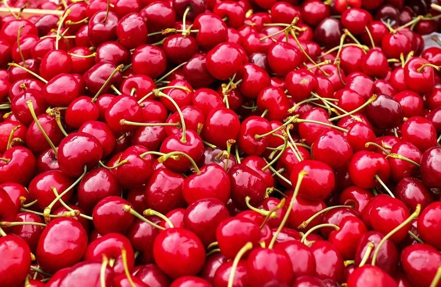 Moscerino della ciliegia: il Veneto si prepara alla lotta biologica