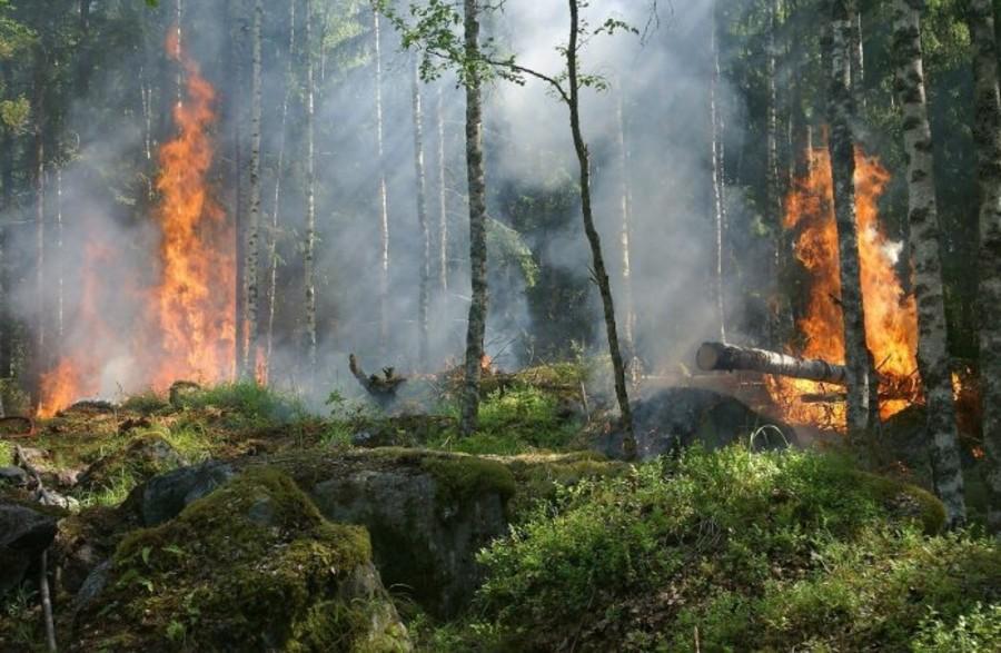 Coldiretti: «Urgono aiuti alle aziende agricole in seguito agli incendi»