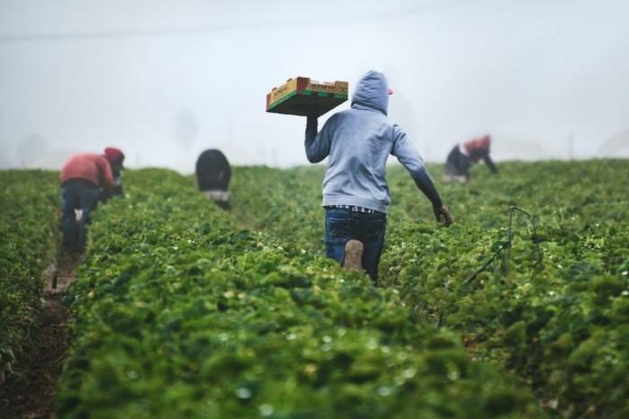 Lavoratori agricoli, in Italia sono 100mila i non vaccinati
