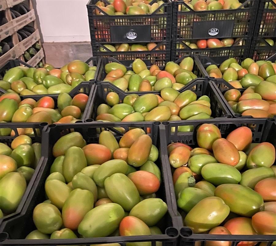 Pomodori, il mercato è saturo e i prezzi scendono in picchiata