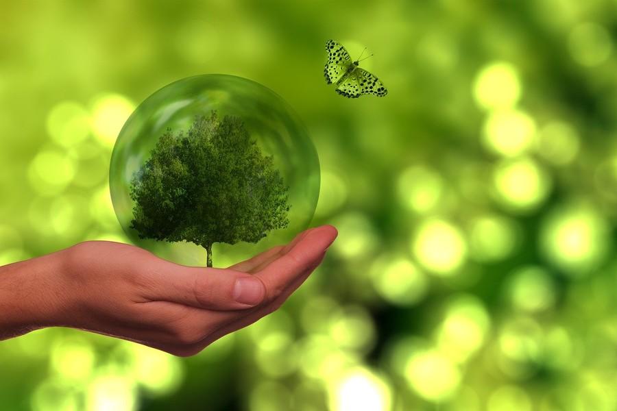Cariverona, sostenuti 21 progetti a tema ambientale con il bando FORMAT